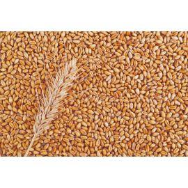 Trigo em grãos 100g